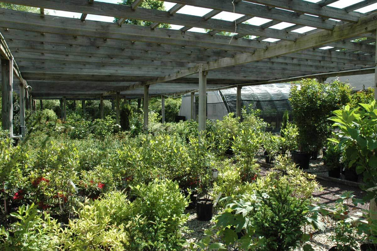 native plant nursery in worcester pennsylvania