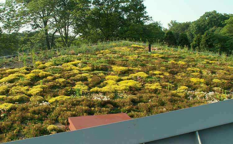museum green roof architect design firm in worcester pennsylvania 2